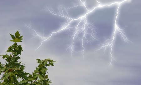 striking: Lightening striking near tree branch.