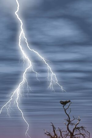 Black bird in a tree at dusk with lightening in the sky. Stock Photo
