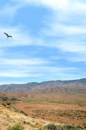 Bird flying over mountainous terrain at Sunset Point in Arizonia.
