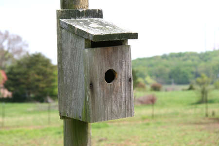 Close-up of old, moldy, weathered birdhouse shot with shallow DOF focusing on birdhouse.