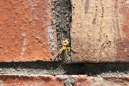 Close-up of yellow spider on brick wall. Stock Photo - 579732