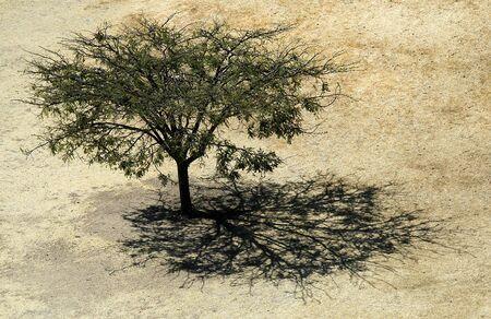 Tree and Shadow, Monte Alb�n, Oaxaca, Mexico