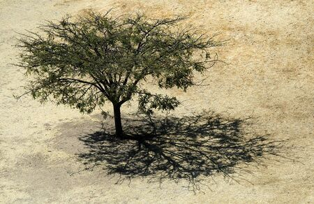 Tree and Shadow, Monte Albán, Oaxaca, Mexico Stock Photo - 10943138