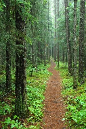 forest path: Pukaskwa Hiking Trail. Photograph - Hike to the White River Suspension Bridge. Pukaskwa National Park near Marathon, Ontario, Canada.