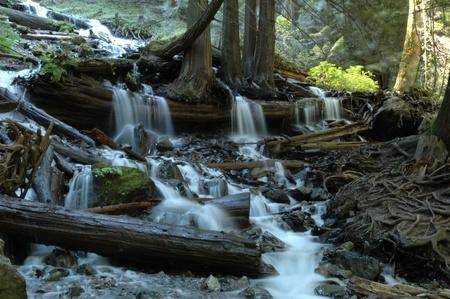 Stream Below Bridal Veil Falls in Bridal Veil Falls Provincial Park near Chilliwack, British Columbia. 免版税图像