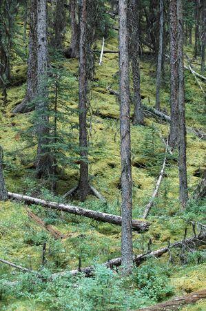 Trees in Kananaskis Country in Alberta