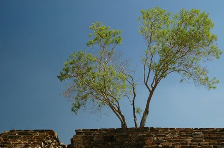 Tree and stone wall and stairs at Monte Alban, Oaxaca, Mexico.