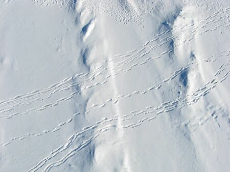 Overhead shot of snow drifts and people tracks on Dow