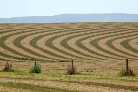 Contours in a hay field during harvesting. This image was taken on Hwy 22 west of Mabton, Washington. Stock Photo
