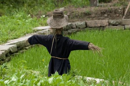 Vogelverschrikker in een rijstveld in Wuzhen, China.