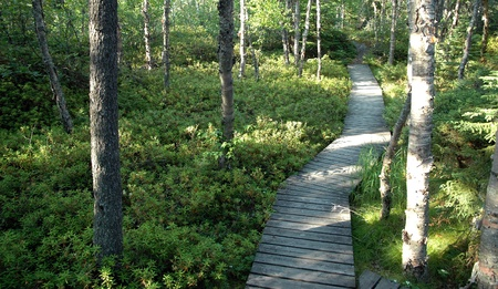 Boardwalk through the woods. Pukaskwa National Park near Marathon, Ontario, Canada.