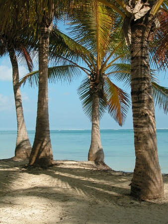 Shade Under the Palms at Punta Cana, Dominican Republic Stock Photo