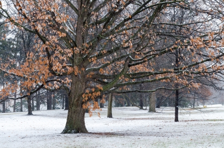 The snow falls for the first time this winter in the Central Experimental Farm and Arboretum in Ottawa, Ontario, Canada  Stock Photo