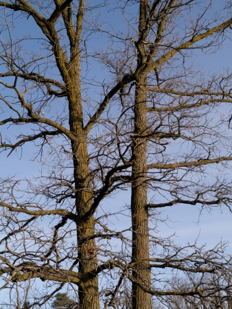 Just before winter, the trees have lost all of their leaves.