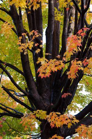 Autumn in My Neighbourhood. Stock Photo - 16793517