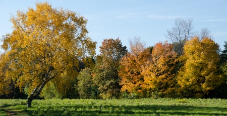 Autumn in My Neighbourhood.