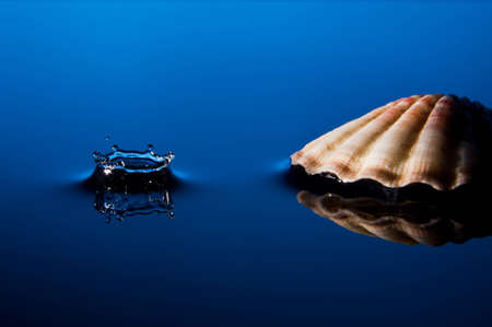 Splash with Shell photo