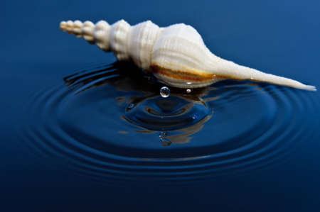 Floating Drop and Shell Stock Photo - 11827360