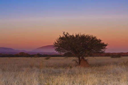 Lone Tree im Freiland in Dube-Naturschutzgebiet Standard-Bild - 5849642