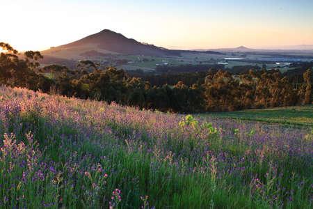 Zeilen der Weinberg in frühen Abend Sonnenlicht in der Nähe von Stellenbosch Standard-Bild - 6448527