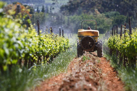 Tractor spraying the vineyards for insects in Stellenbosch photo