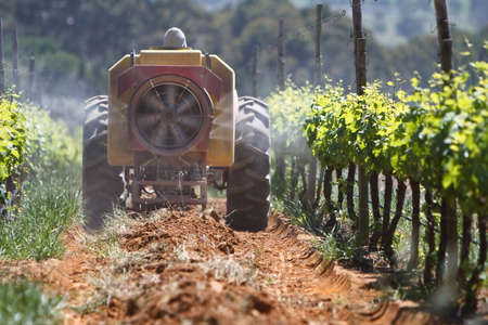 Zugmaschine Sprühen die Weinbergen für Insekten in Stellenbosch Standard-Bild - 6448521