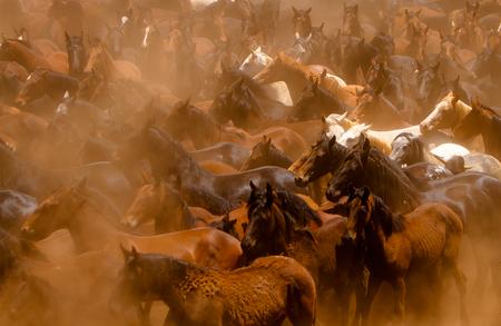 Viele Wildpferde im afrikanischen Staub läuft Standard-Bild - 23175432