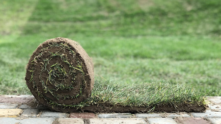 A roll of grass on the paving slab. 스톡 콘텐츠