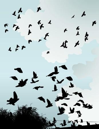 vol d oiseaux: La silhouette des oiseaux sauvages dans le ciel.