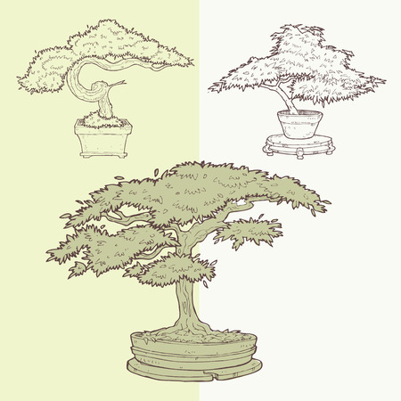 Vector Illustration of Bonsai Trees s drawing