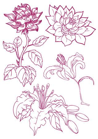 Fleurs dessinées à la main Banque d'images - 50154155