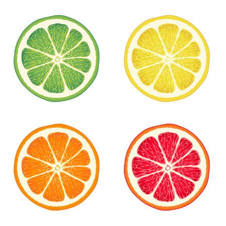 Vector illustration of citrus fruits