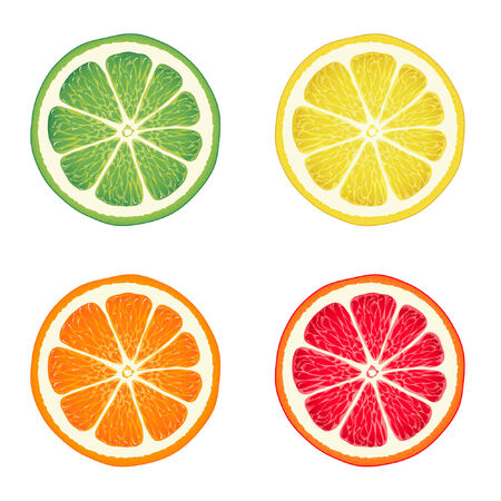 lime: Vector illustration of citrus fruits