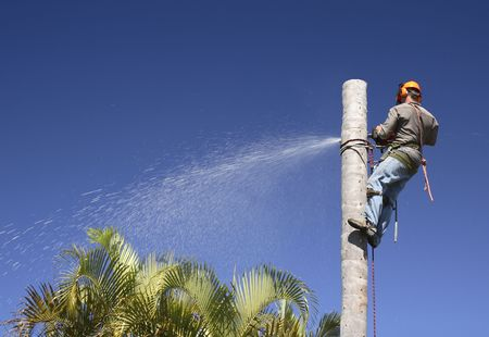 pruning: Man cutting down the palm tree trunk in sections