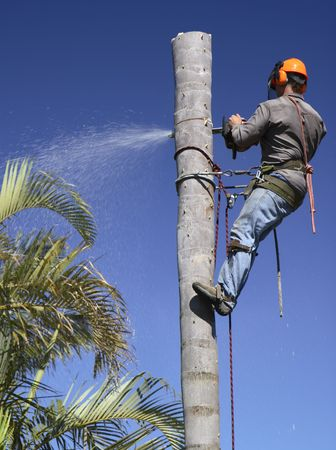 woodcutter: Man cutting down the palm tree trunk in sections