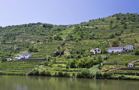 Vineyards of the Douro Valley photo
