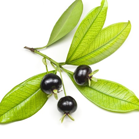 Grumichama Eugenia Brasiliensis
