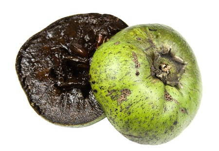 Black sapote or chocolate pudding fruit Stock Photo - 11807164