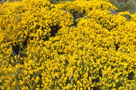 ground cover: Cape Espichel Ground Cover, Portugal
