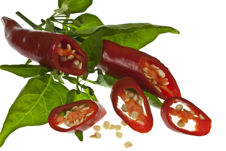 chilli red: Red Chilli Peppers y Chilli Plant