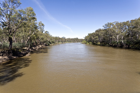 silty: The Murray River at Tocumwal, New South Wales, Australia