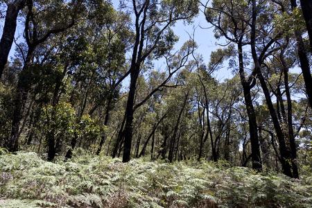 victoria park: View of The Grampians National Park in Victoria, Australia