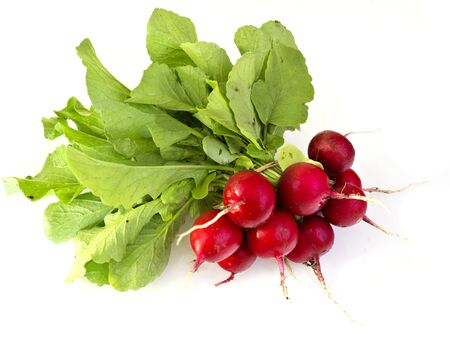 freshly picked: Bunch of freshly picked radishes Stock Photo