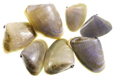 mollusc: Pipis (Plebidonax deltoides) is a small, edible saltwater clam or marine bivalve mollusc of the family Donacidae, endemic to Australia
