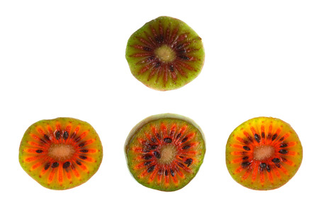 hardy: Slices of red Hardy Kiwi (Actinidia arguta), a perennial vine which produces a small fruit resembling the kiwifruit