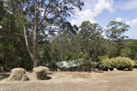 hinterland: House located in tranquil nature amongst tall gum trees in Yandina hinterland, Queensland, Australia