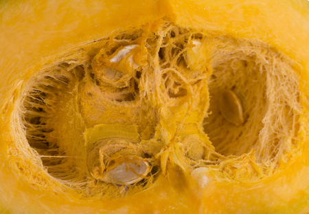 fibrous: Inside of a pumpkin seed cavity showing the seeds and the fibrous strands
