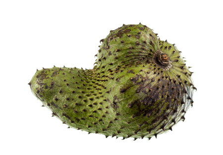 Soursop is a dark green and prickly fruit of the broadleaf evergreen tree Annona muricata, with a juicy, acid, whitish and aromatic flesh. Stock Photo