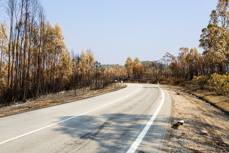 Thousands of hectares of pine and eucalypt forests were reduced to ashes during the forest fires of 2017 hot summer in Central Portugal