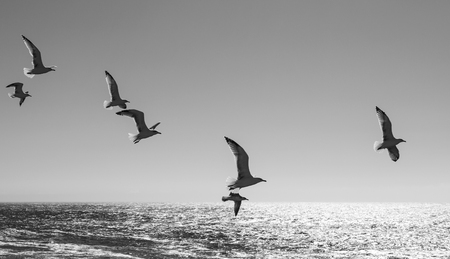 Seagulls flying over the Atlantic Ocean near Cascais, Portugal